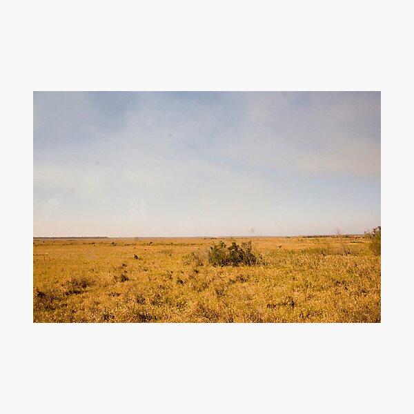 Louisiana Fields Photographic Print