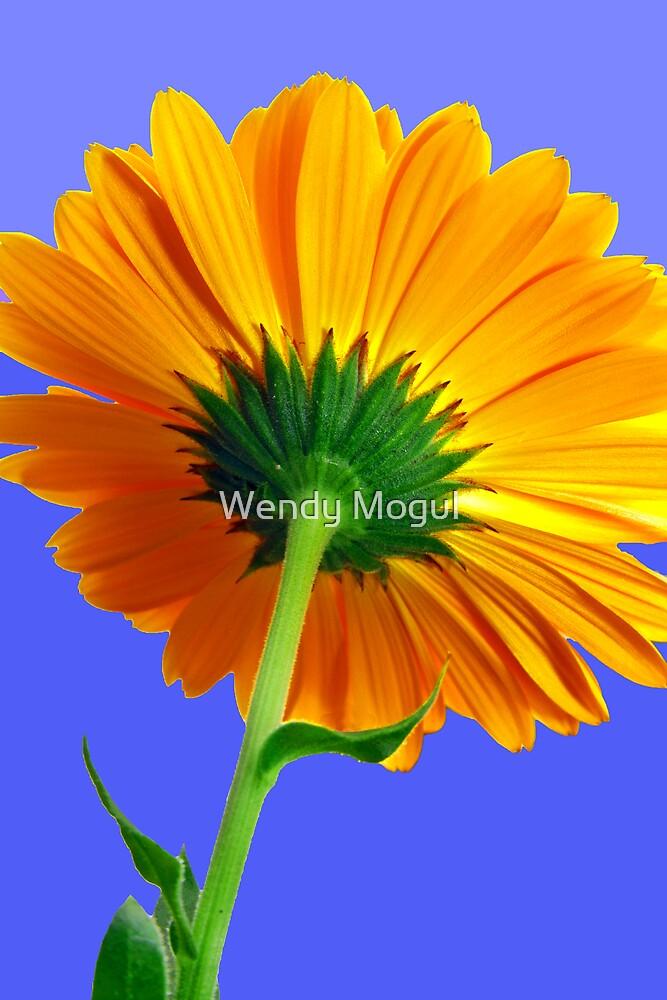 Sunshine  by Wendy Mogul