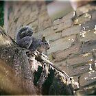Young squirrel by Lynn Starner