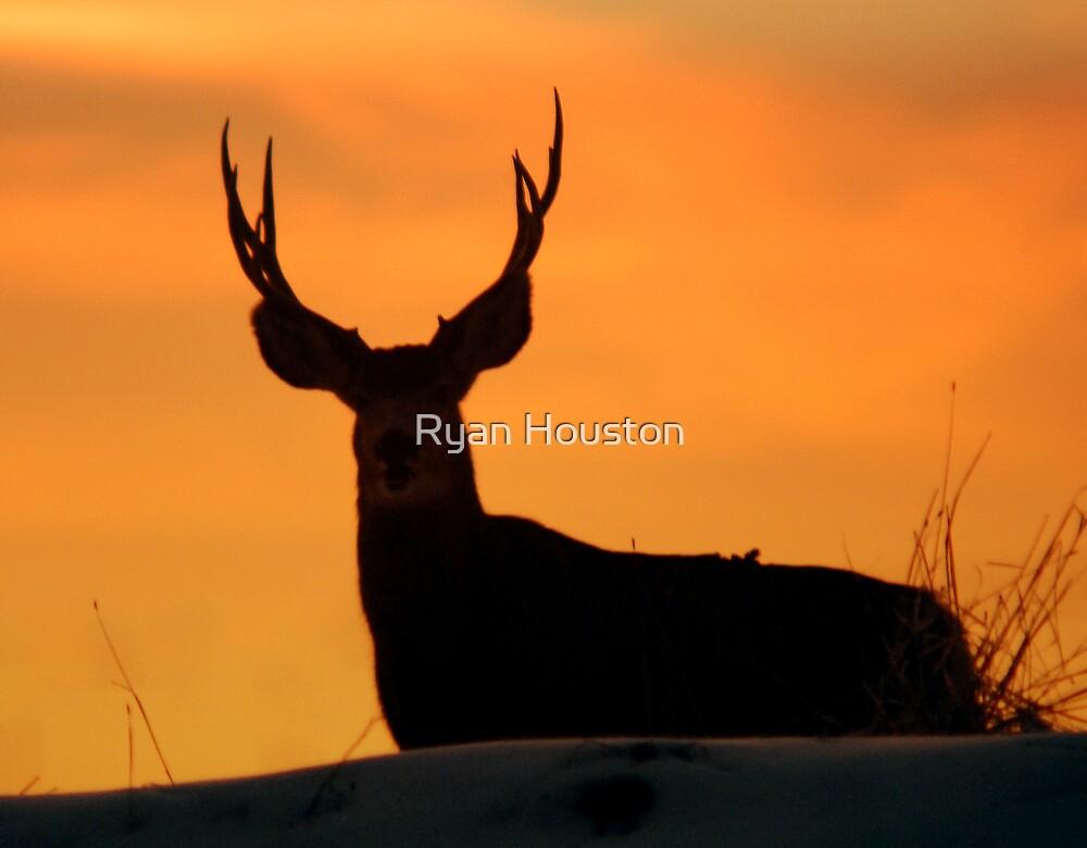 Grazing at Sunset by Ryan Houston