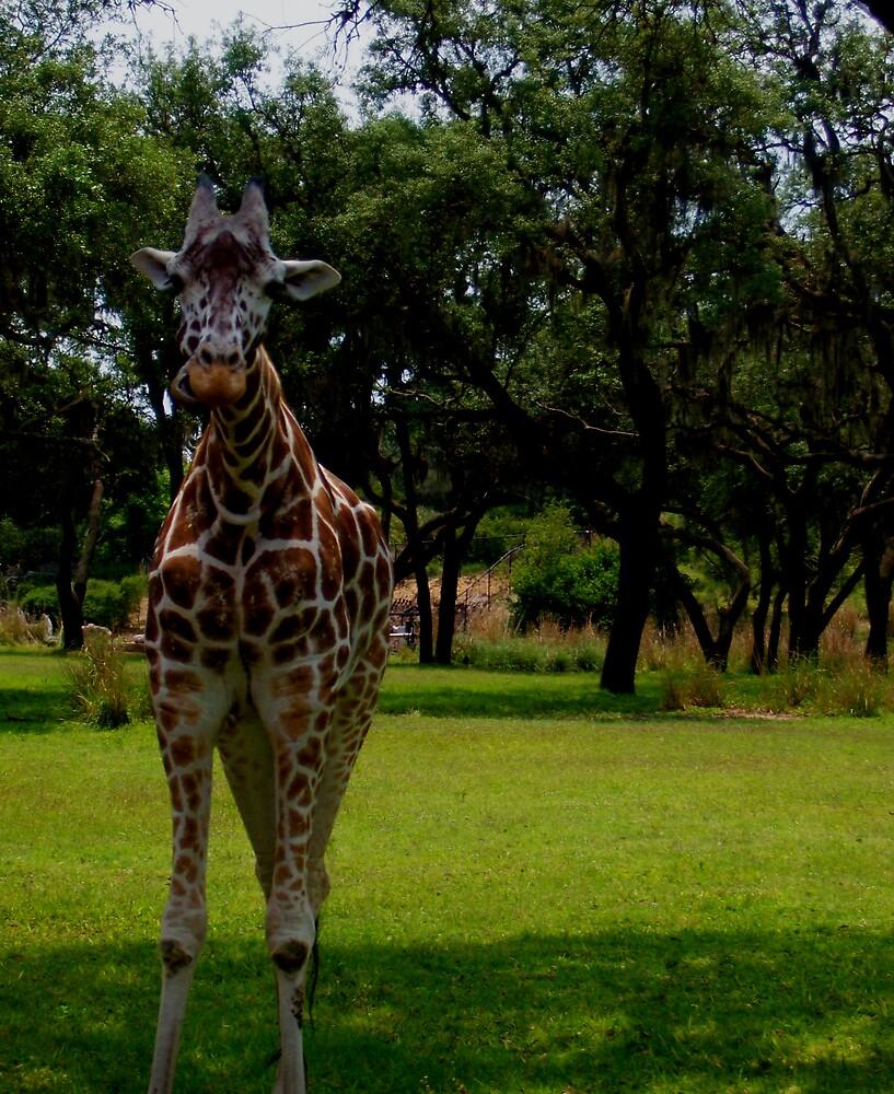 Giraffe by Allib