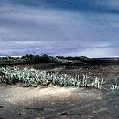 Dawn Beach by Ant Vaughan