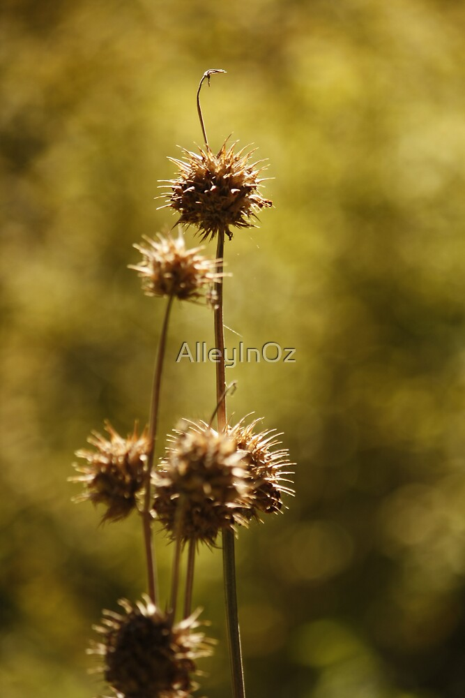 Golden Orbs by AlleyInOz