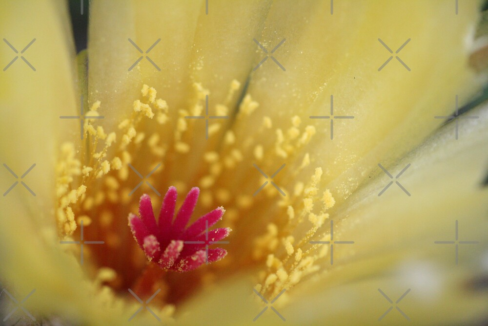 Red on Yellow by Joy Watson