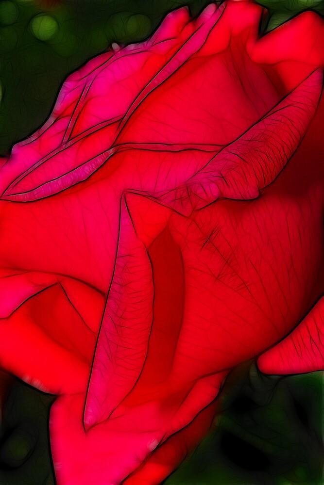 Red rose by SarahTrangmar