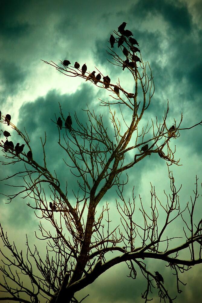 Untitled by Rachel  McKinnie