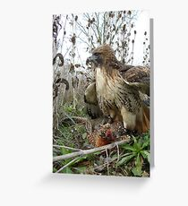 Red Tailed Hawk on a Pheasant Greeting Card