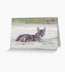 Resting beauty Greeting Card