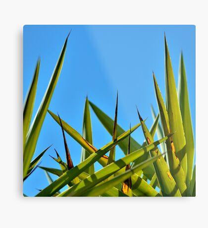 A Perfect Day Metal Print