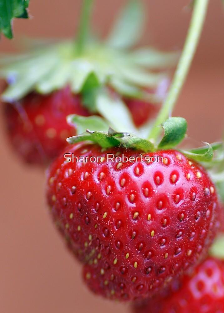 Strawberry by Sharon Robertson