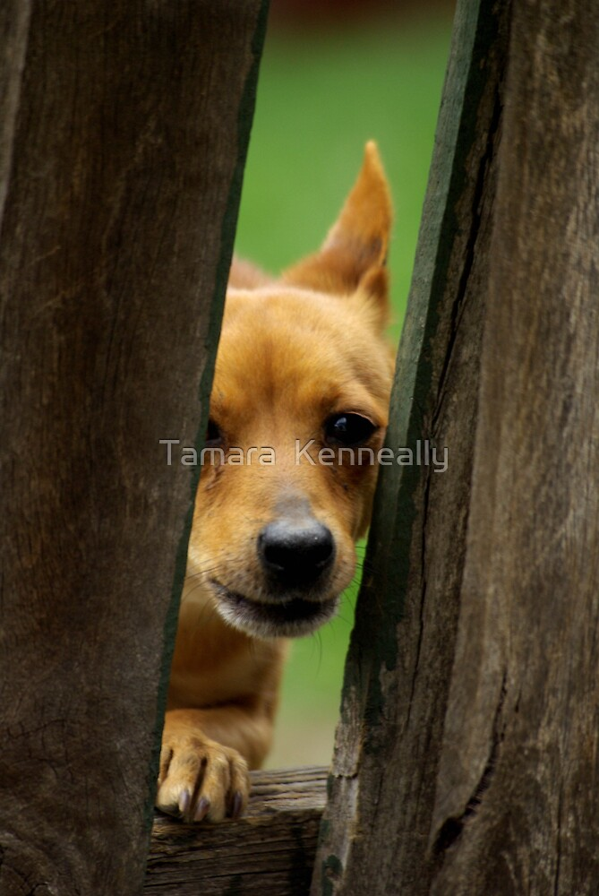 The Protector by Tamara  Kenneally