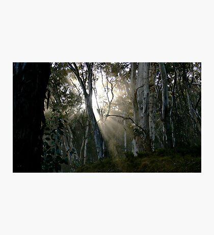 A Quiet Place Photographic Print