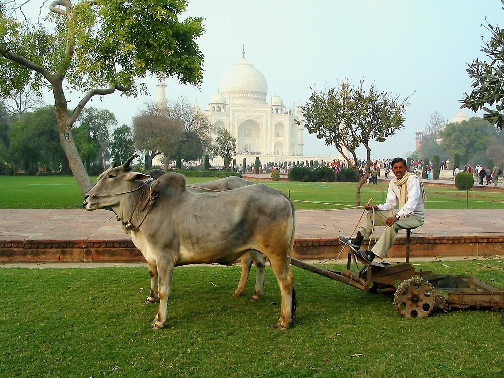 Taj Lawnmower by Jeff Barnard