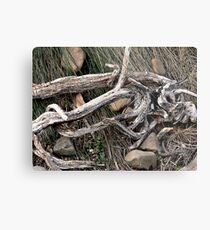 Stick and Wire Metal Print