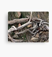 Stick and Wire Canvas Print