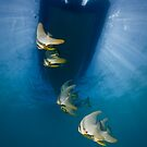 Batfish Under Our Boat by Ross Gudgeon