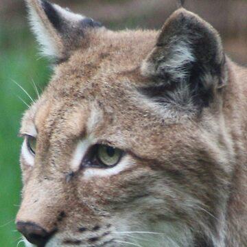 Lynx by sjmphotos