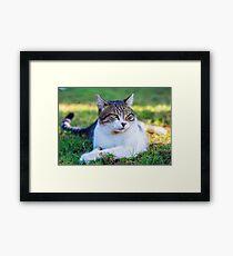Green eyed cat sitting outside Framed Print