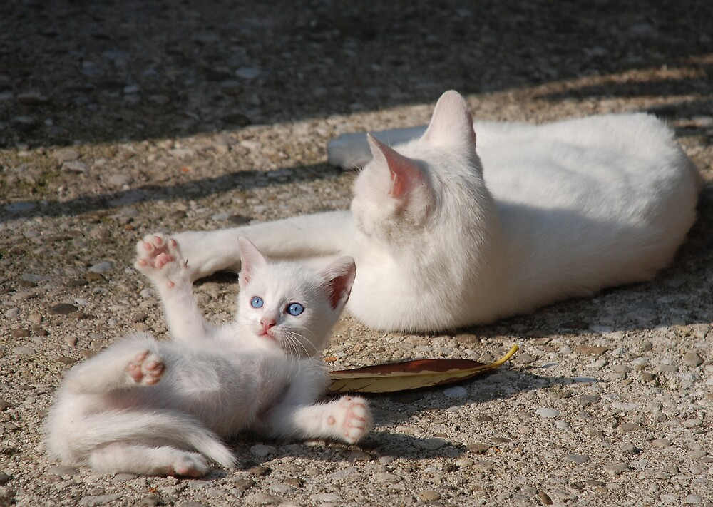 White Kitten with Mother  by jojobob