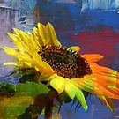 Sunflower by AndaM