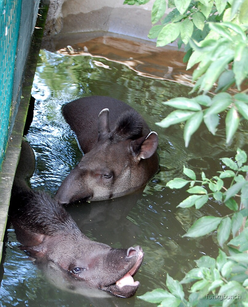 tapirs playing by funkybunch