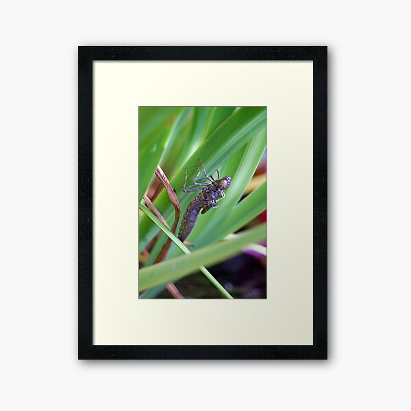 dragonfly's previous clothes Framed Art Print