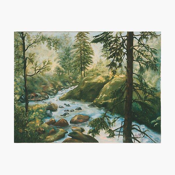 Adirondack Stream Photographic Print