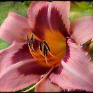 Mauve Beauty by Jonicool