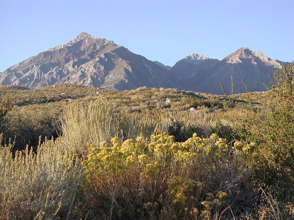 Carson Pass, Sierra Nevada by MPDurbin