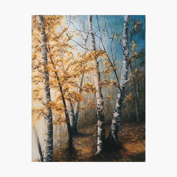 Morning Mist Photographic Print
