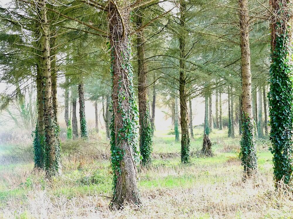 Fays woodlot by lukshot