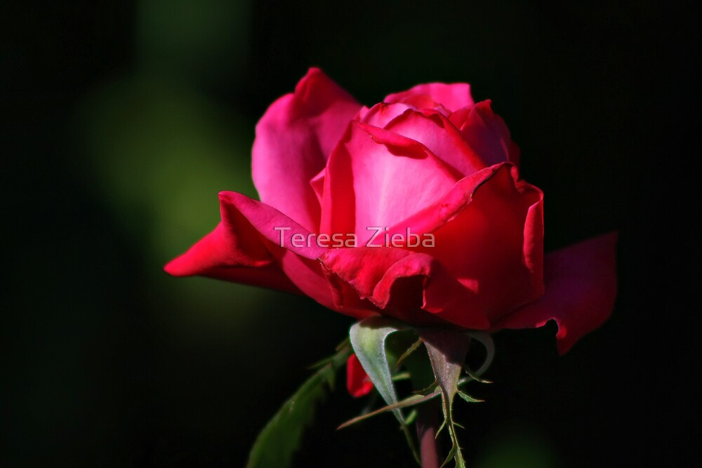 Soft Velvet by Teresa Zieba