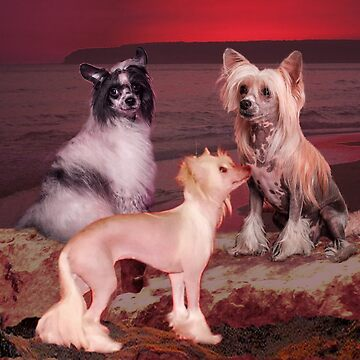 Chinese Crested Dog by Batiste