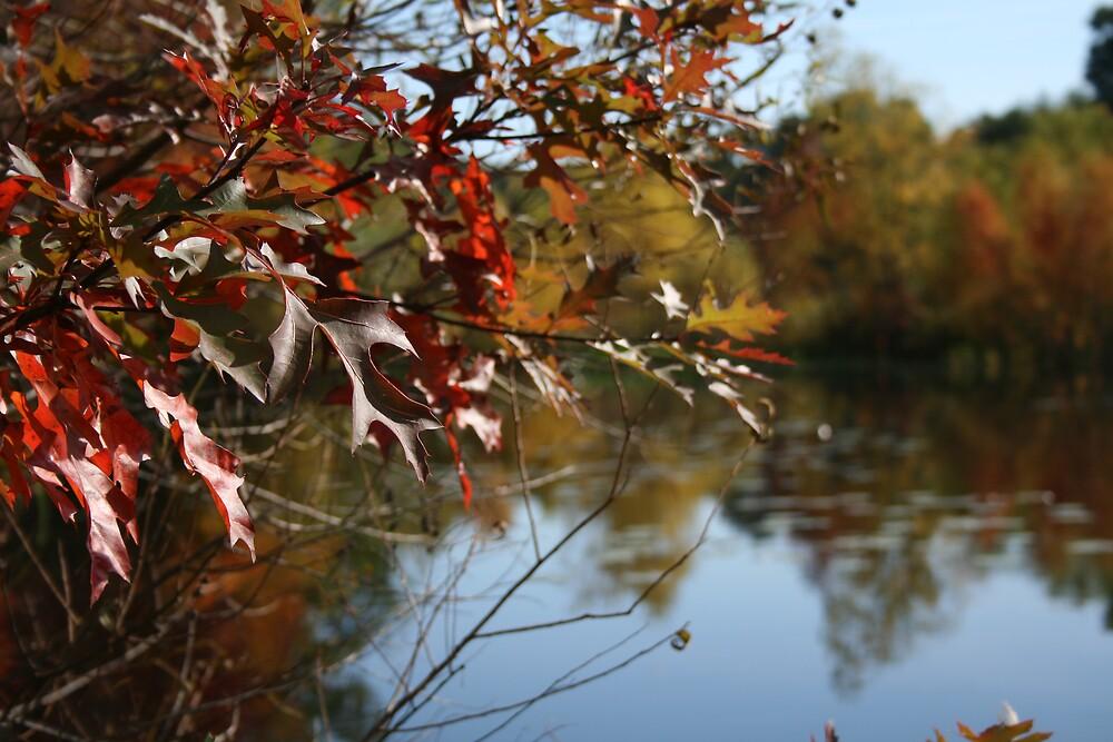 hidden pond by constance42