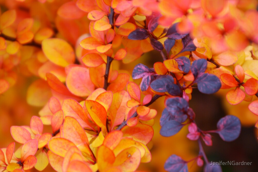 Colors of Fall by JeniferNGardner