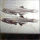 « des poissons » by linda vachon