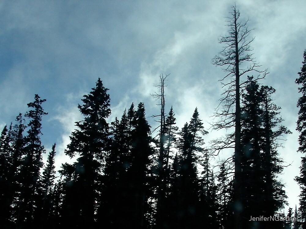 Looking Up in Colorado by JeniferNGardner