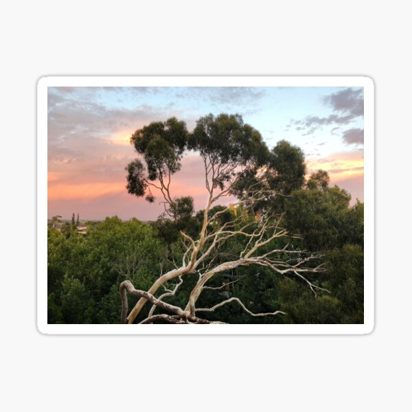 Pink Clouds and Ghost Gum Sticker
