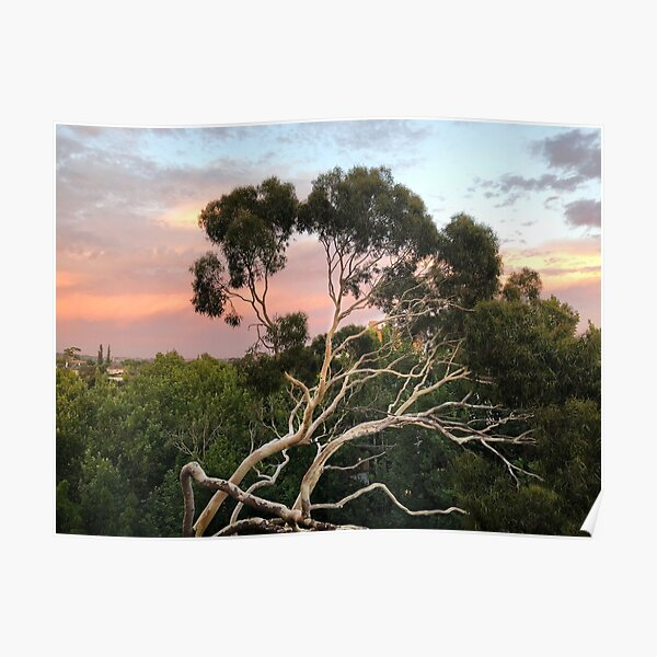 Pink Clouds and Ghost Gum Poster