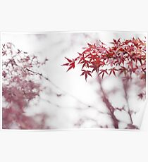 Japanese maple red leaves in autumn mist art photo print Poster