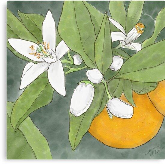 Orange Blossom by PenguinLeaf