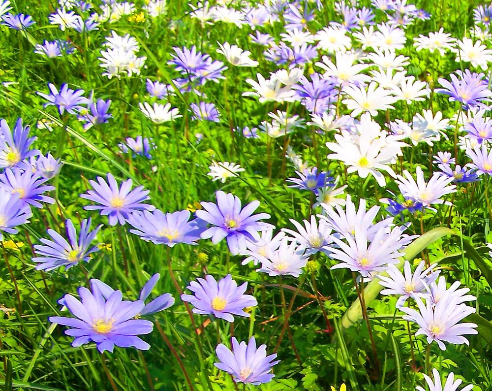 Lilac & White by sjmphotos