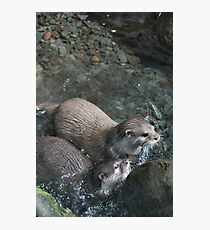 Otters - image 9 Photographic Print