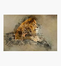 Lion on the rocks Photographic Print