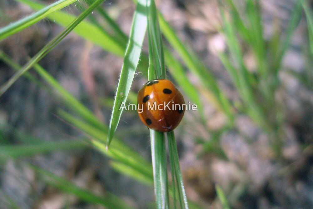 Ladybug by Amy Scott