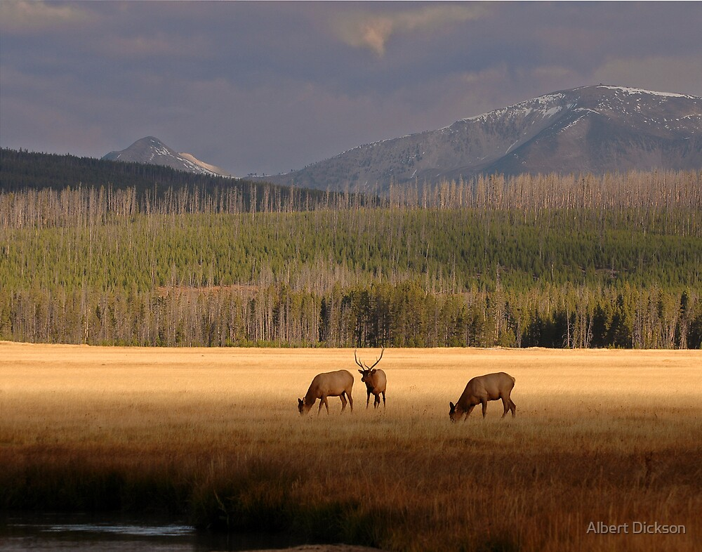Gibbon River Valley, Yellowstone by Albert Dickson