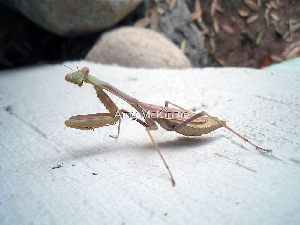 Praying Mantis by Amy Scott