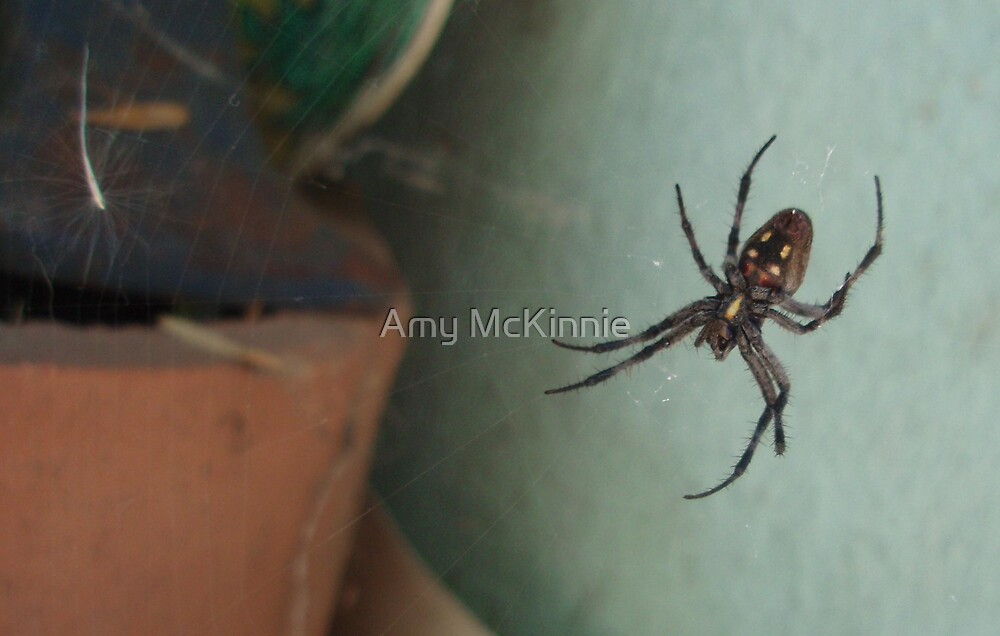 Orbweaver by Amy Scott