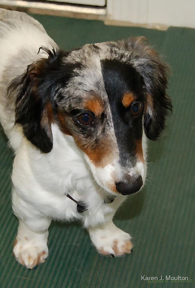 The Court Jester Dog by Karen J. Moulton