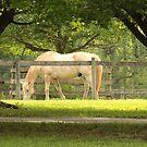 Horse by elasita